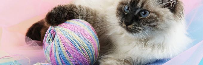 Как убрать запах кошачьей мочи с ковра: обзор самых 86