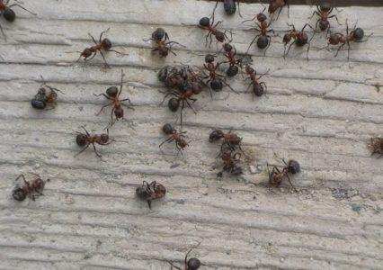 Методы выведения насекомых