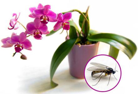 Какие вредители поражают растения