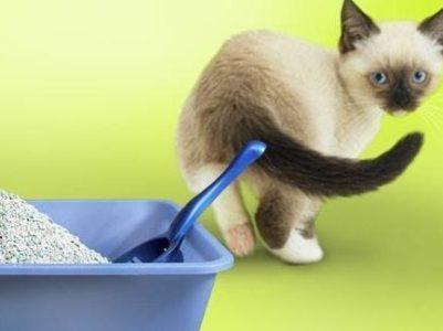 Причины отказа кошек от лотка