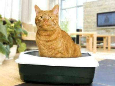 Почему кошка пакостит дома