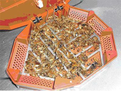 Вывести тараканов из квартиры
